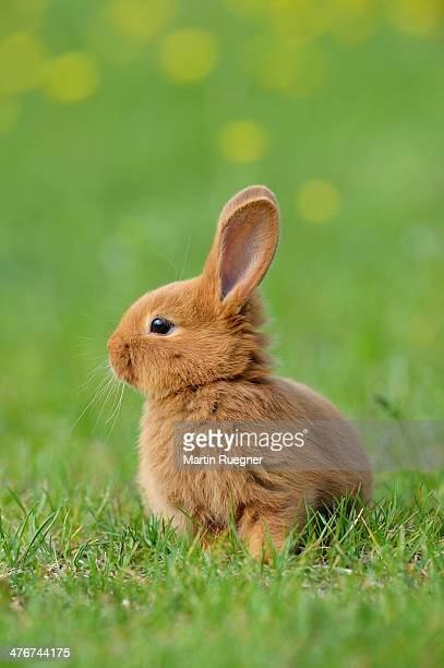 Baby rabbit in meadow