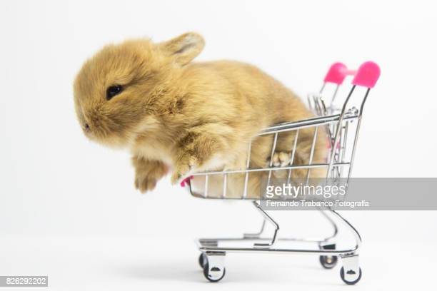 Baby rabbit in shopping cart