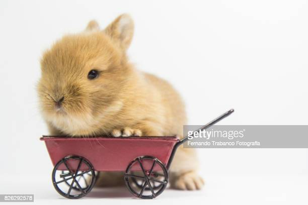 Baby rabbit with a wheelbarrow
