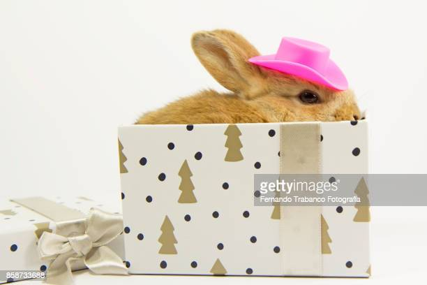 Baby rabbit with hat inside a gift box