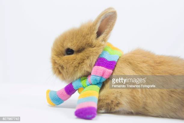 Baby rabbit with rainbow scarf around his neck