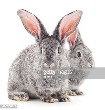 Baby rabbits. : Stock Photo