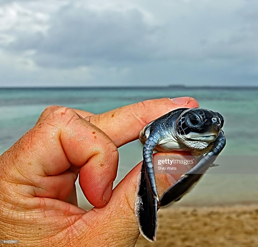 Boy holding baby turtle