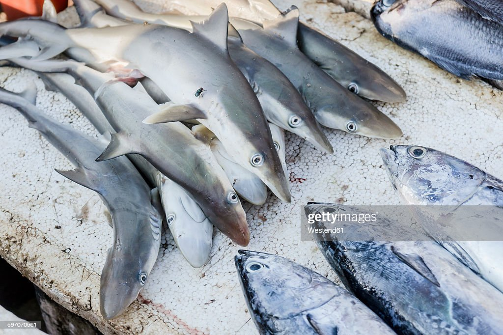 Baby sharks on fish market stock photo getty images for Baby shark fish