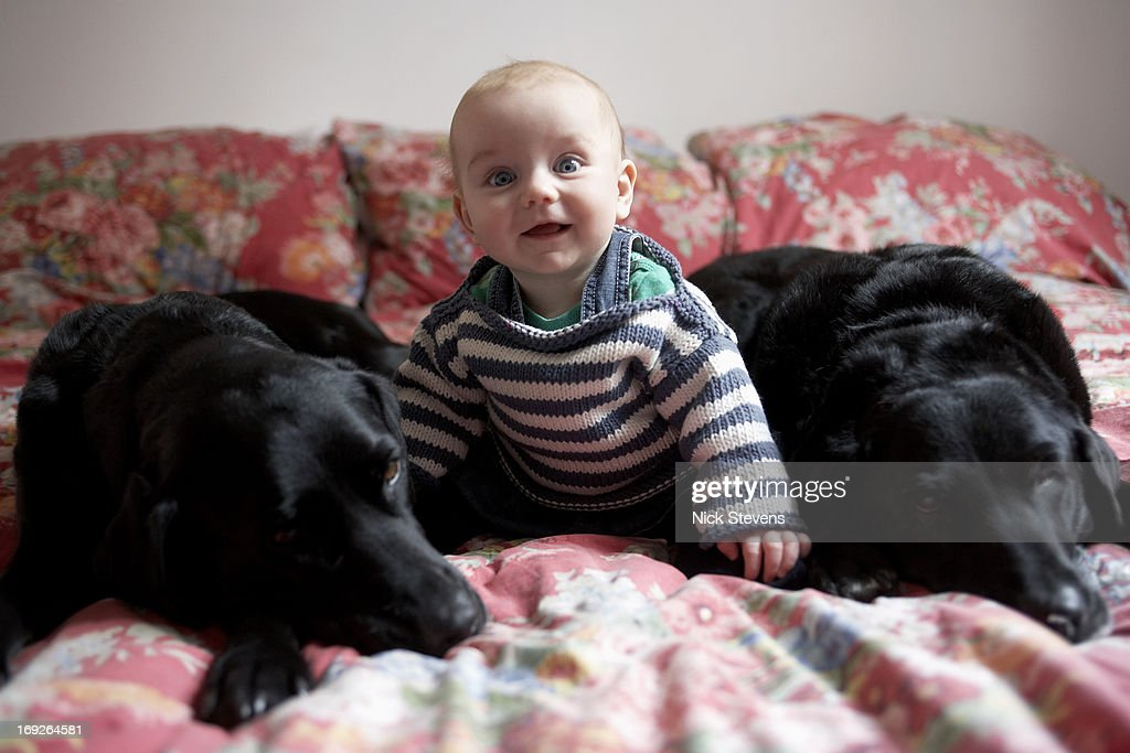 Baby sitting with dogs on sofa : Stock Photo