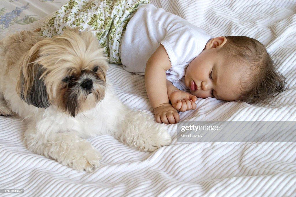 Baby sleeping next to dog : Stock Photo