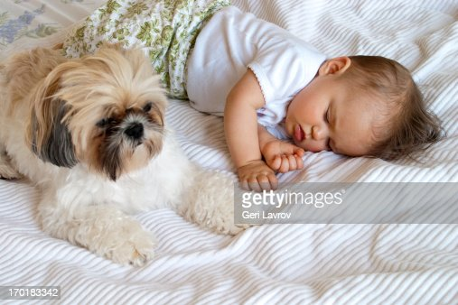 Baby sleeping next to dog : Stock Photo
