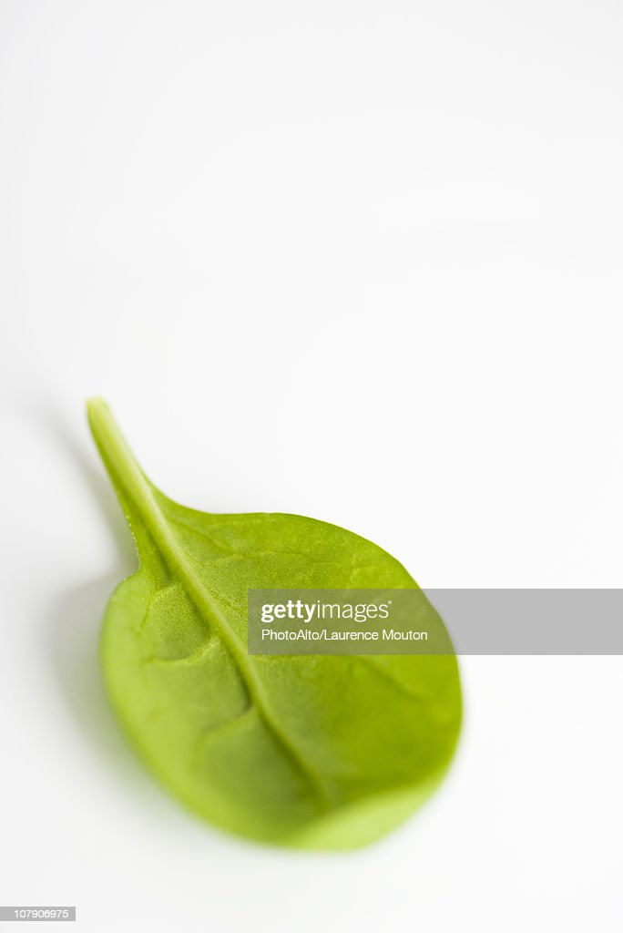 Baby spinach : Stock Photo