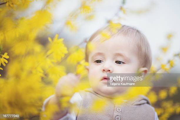 Baby surrounded by forsythia flowers