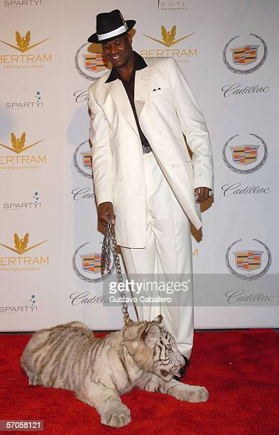 A baby tiger licks Shaquilles O'Neal's shoe as he poses on the red carpet at his 34th 'Scarface' themed birthday party on March 10 2006 in Miami...