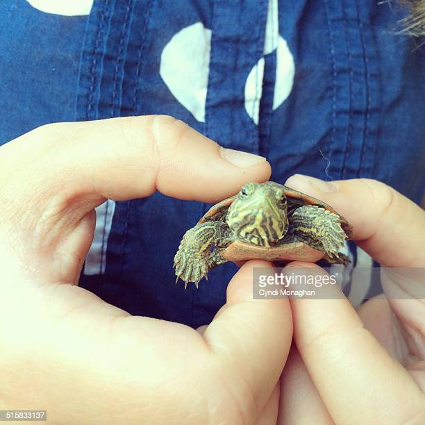 Baby Turtle