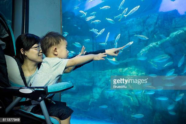 Baby with mom watching fish