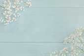 White baby's breath on light blue background with copyspace