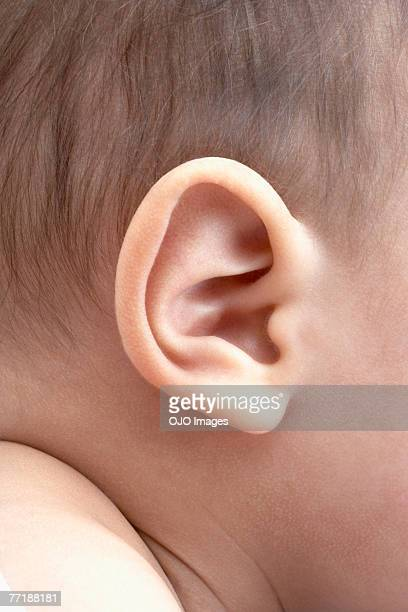 A baby's ear