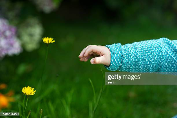 A baby's hand reaching for flowers