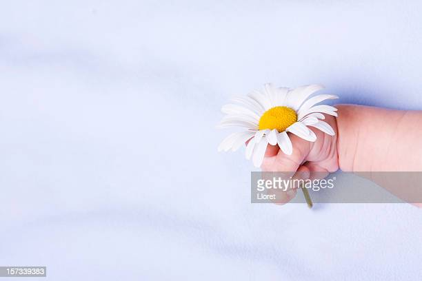 Bébé main avec Daisy