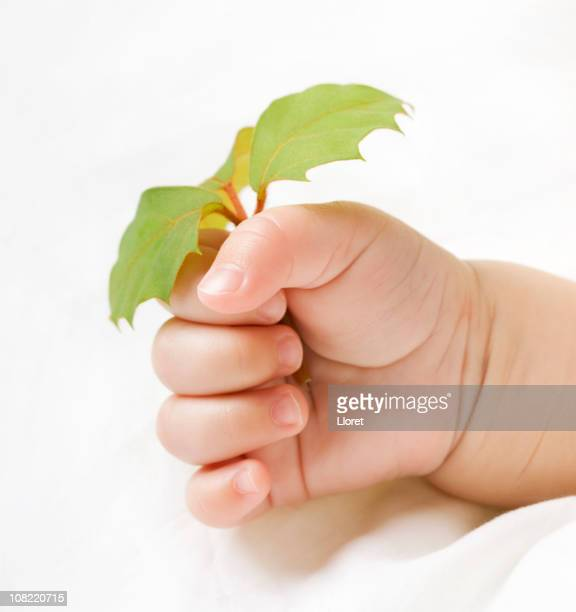 Baby´s hand with young plant (XL)