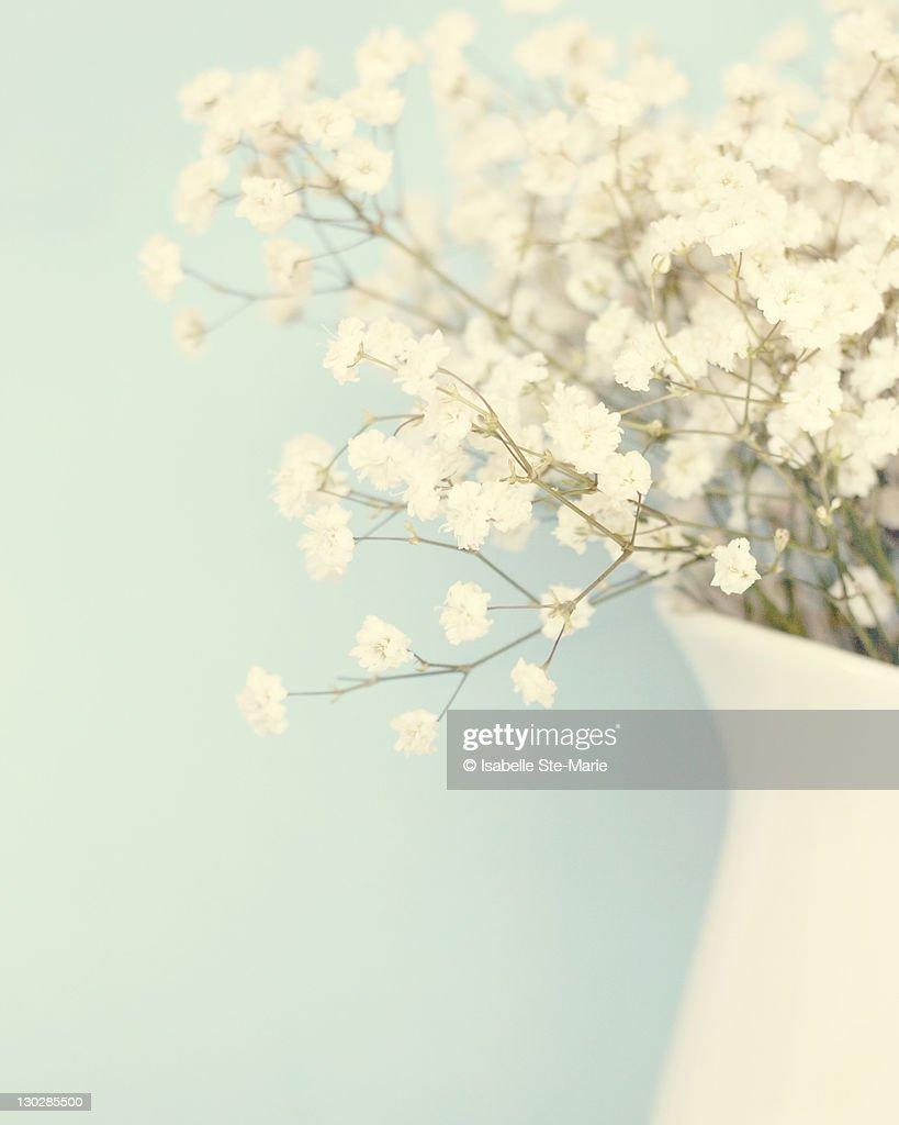 Babysbreath in white vase : Stock Photo