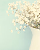 Babysbreath in white vase