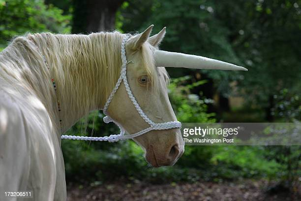 Bacardi a Tennessee walking horse dressed as a unicorn waits for the start of the Great Falls 4th of July Hometown Parade on Thursday July 4 in Great...