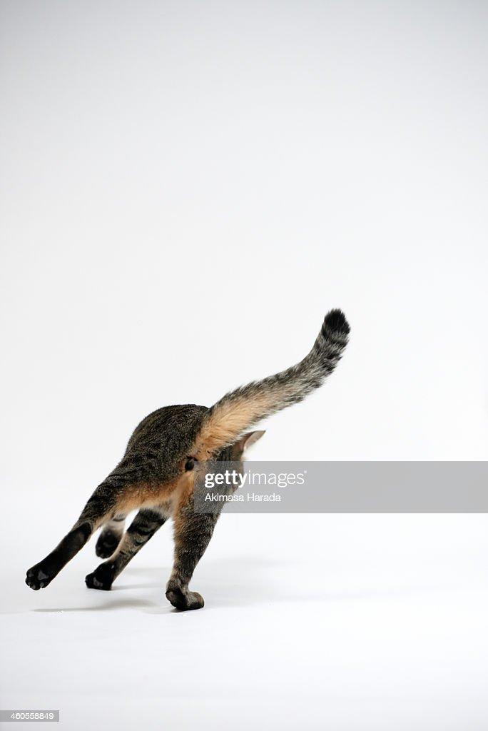 Back figure of a cat
