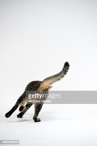 Back figure of a cat : Stock Photo