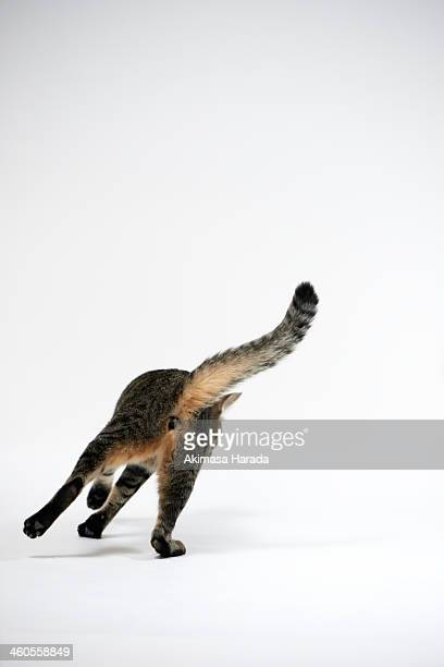 Back figure of a cat