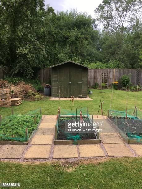 Back garden allotment