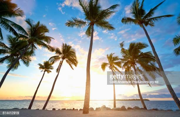 Back lit palm trees on tropical beach