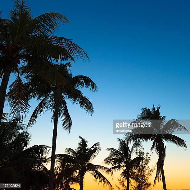 Gegenlicht Palmen mit Sonnenuntergang im Hintergrund.