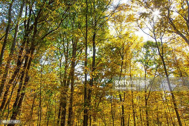 back lit trees turning color in Fall