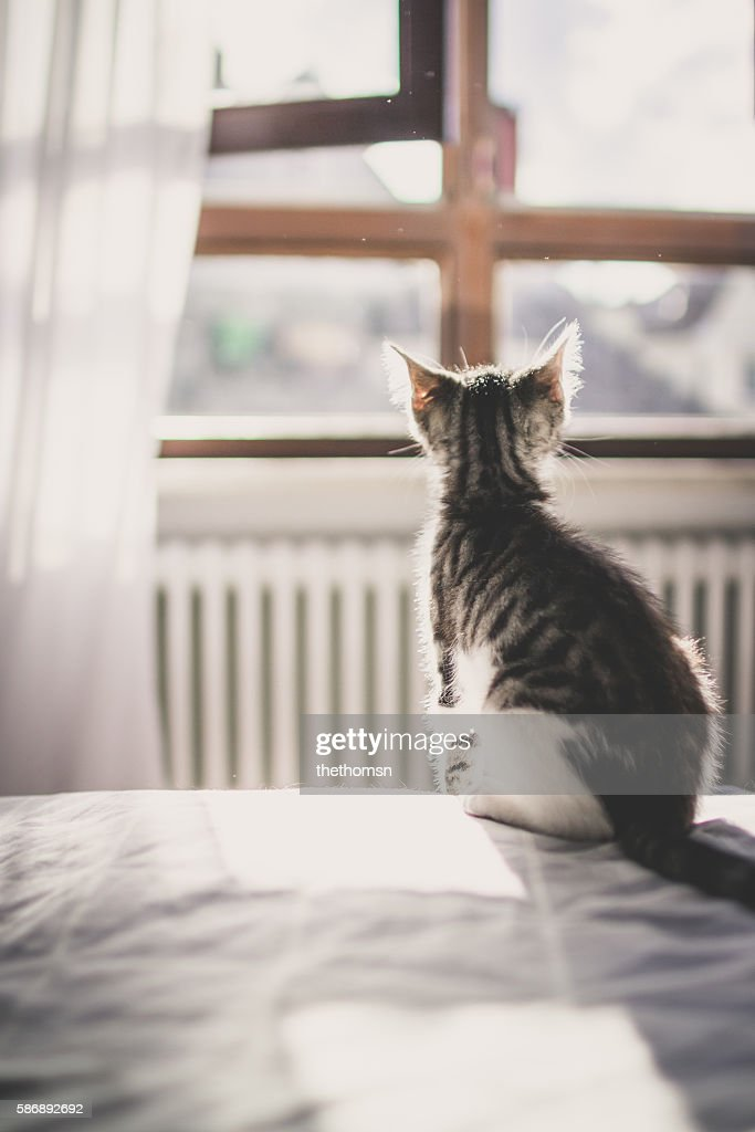 Back of a small grey-white cat in front of a open window