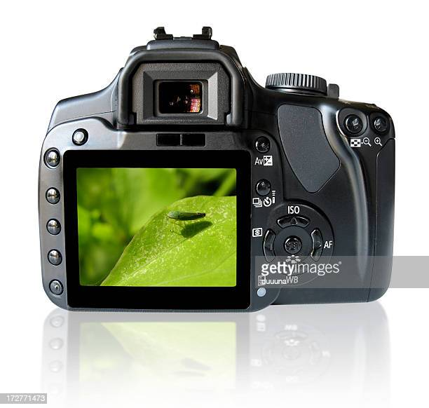 Back of SLR camera with clipping path