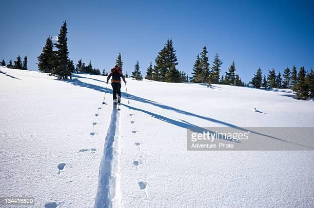Backcountry Skier Skinning in Winter Mountain Environment