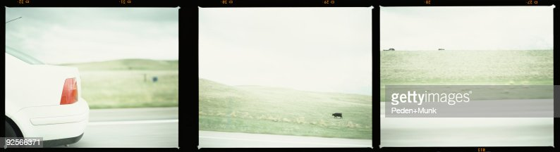 Backend of car driving past cow pasture : Foto de stock