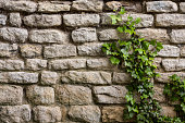 Backgrounds - An ancient stone wall with ivy growing up it.