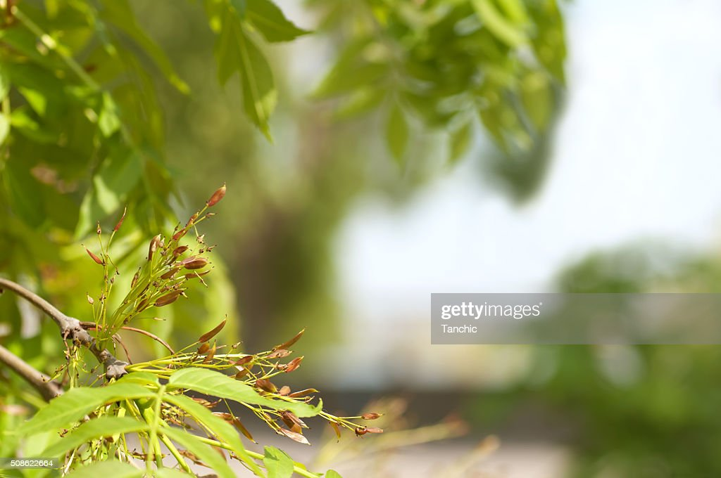 background from young fresh leaves in spring : Stock Photo