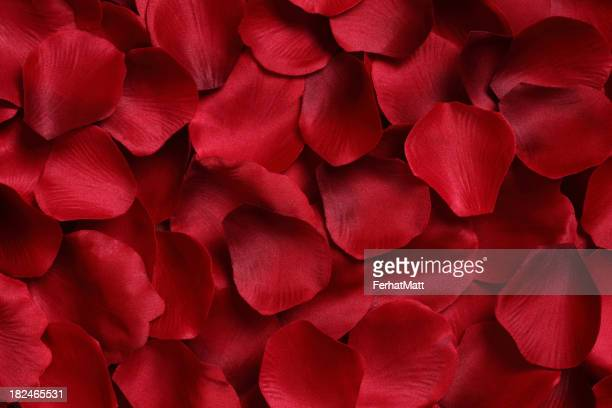 A background full of red rose petals
