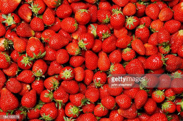 Background,  hundreds of ripe strawberries