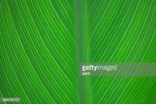 Background Leaf : Stock Photo