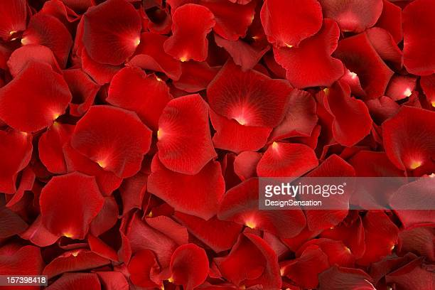 Background made of solely red rose petals