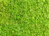 beautiful natural moss, texture and background