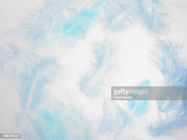 Background of blue feathers