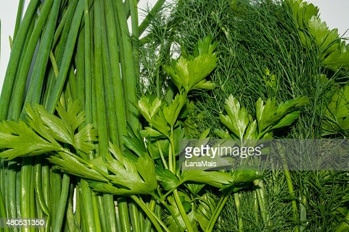 Background of dill, parsley and onions : Stock Photo