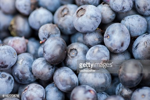 Background of Fresh blueberries in nature outdoors : Stock Photo