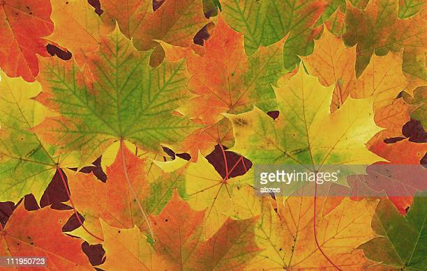 Background of multicolored fall leaves