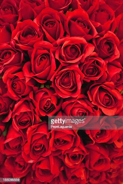 Sfondo di Rose rosse