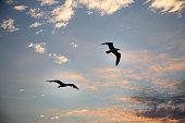 Freedom of sky.