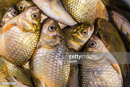 background of small fish caught in the river crucian : Stock Photo