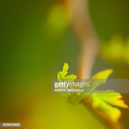 background of spring leaves : Stock Photo